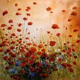 Delicate poppies - Eric Bruni
