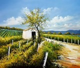 A summer in the vineyards ©Bruni Eric