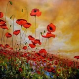 Wild poppies - Eric Bruni - Lotton Gallery